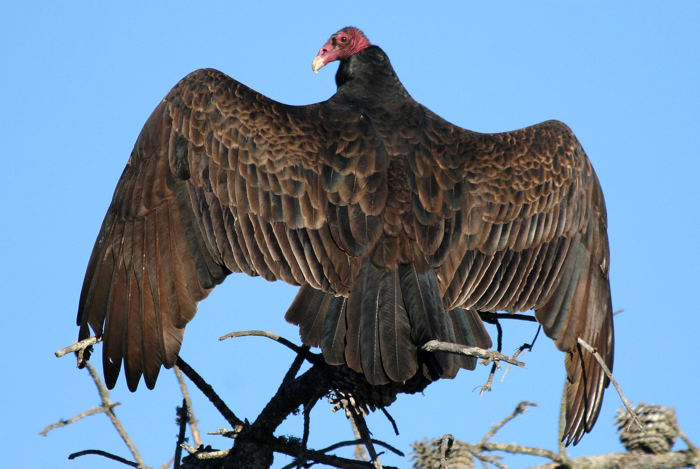 picture vulture