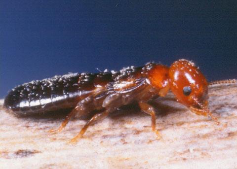 Pacific Coast Termite Orange County